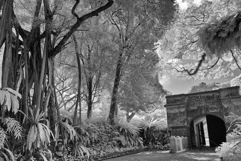 Fort Gate and Tree