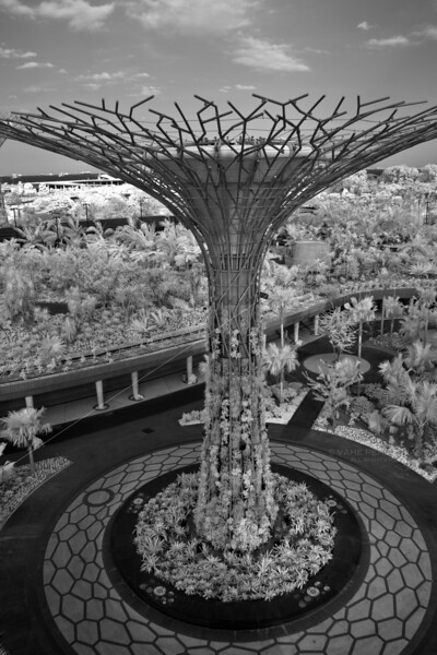 How an Artificial Tree Grows