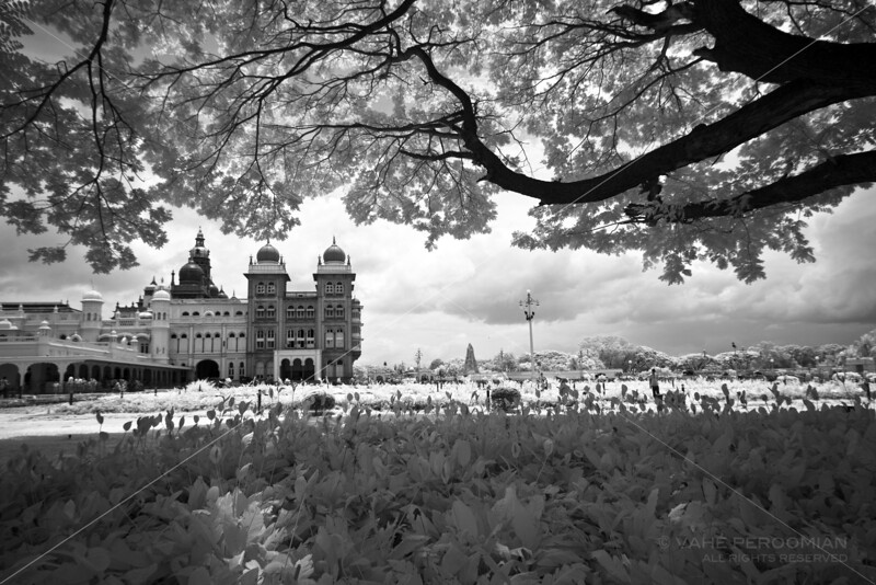 A Tree's View of Mysore Palace