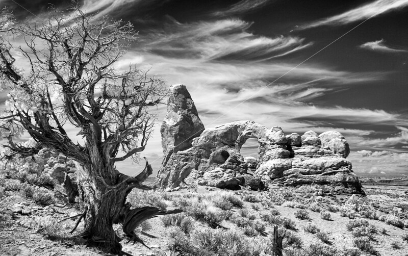 Turret Arch and Tree