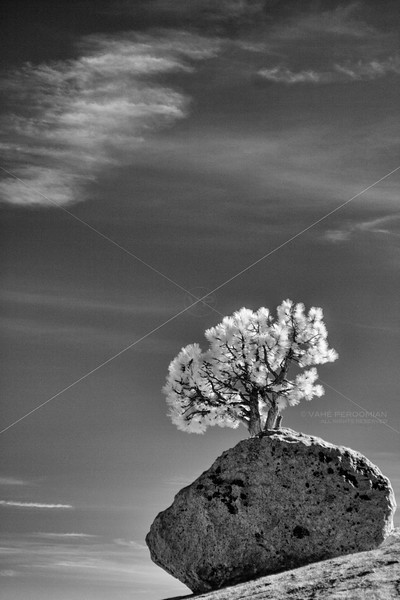 Rock and Tree, Olmsted Point