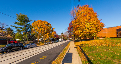 Autumn Colors along Woodlawn Ave