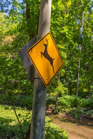 Deer Way