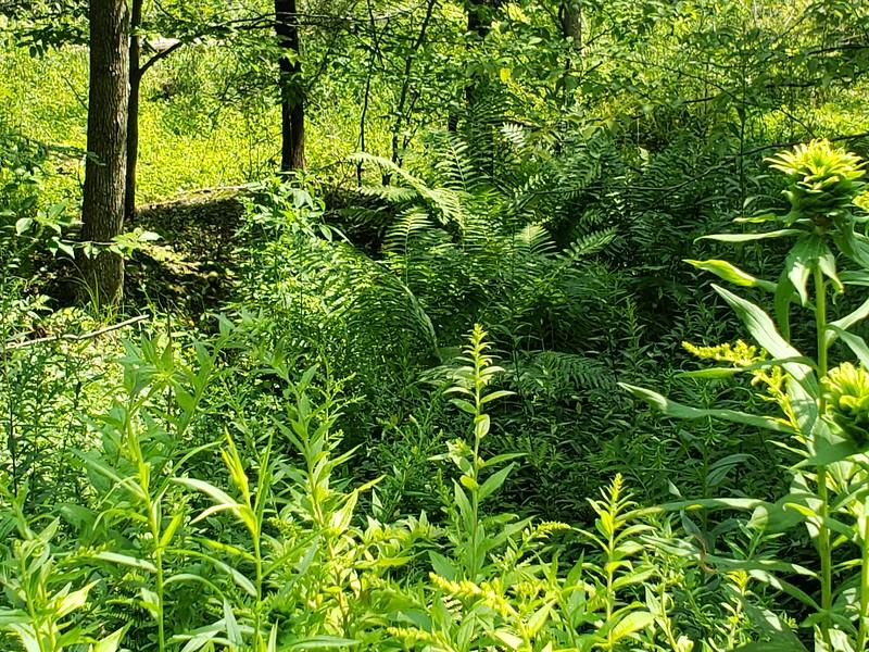Wetland plants next to site.