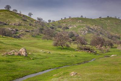 Oak Woodland, Sierra Foothills