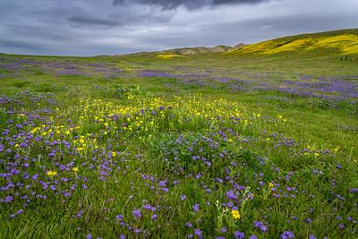Flowers on the Plain
