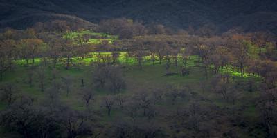 Cuyama Valley Light