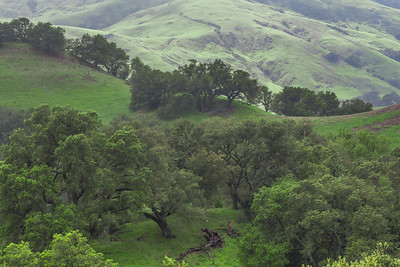 Oaks and Hills, West Paso Robles