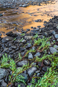 Along the shore of the Snake River, Hells Canyon
