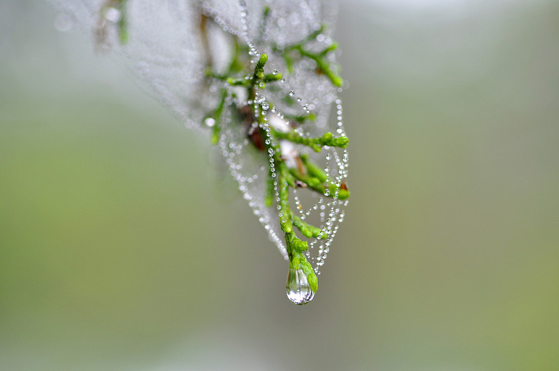 Dew Drop Necklace, Milton, FL.