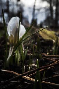 Spring Garden III (White Flower)