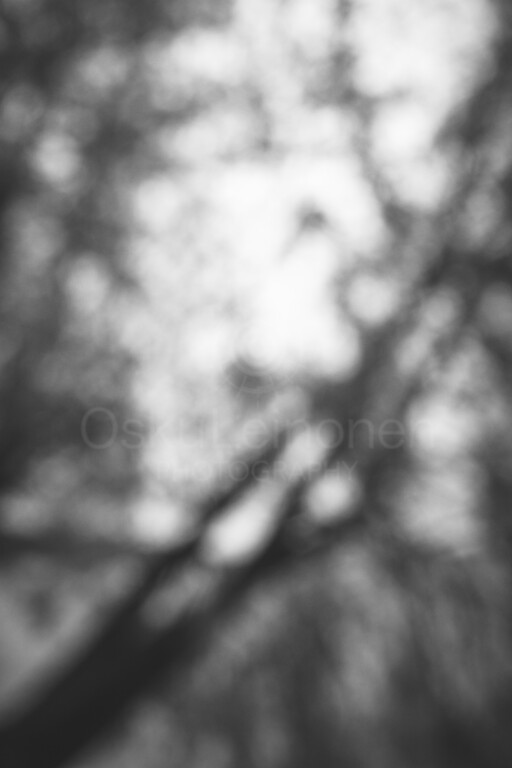 Dreamy View II (Tree)
