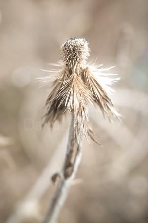 Spring Garden X (Dry Flower)