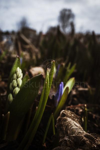 Spring Garden V (Purple Flower)