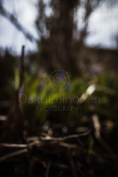 Spring Garden VII (Blurred Grass)