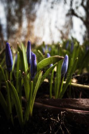 Spring Garden VIII (Purple Flower)