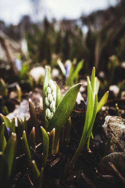 Spring Garden II (White Flower)