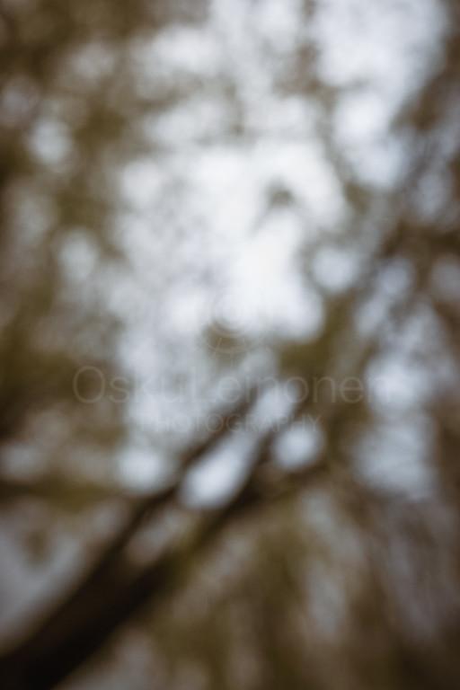 Dreamy View III (Tree)
