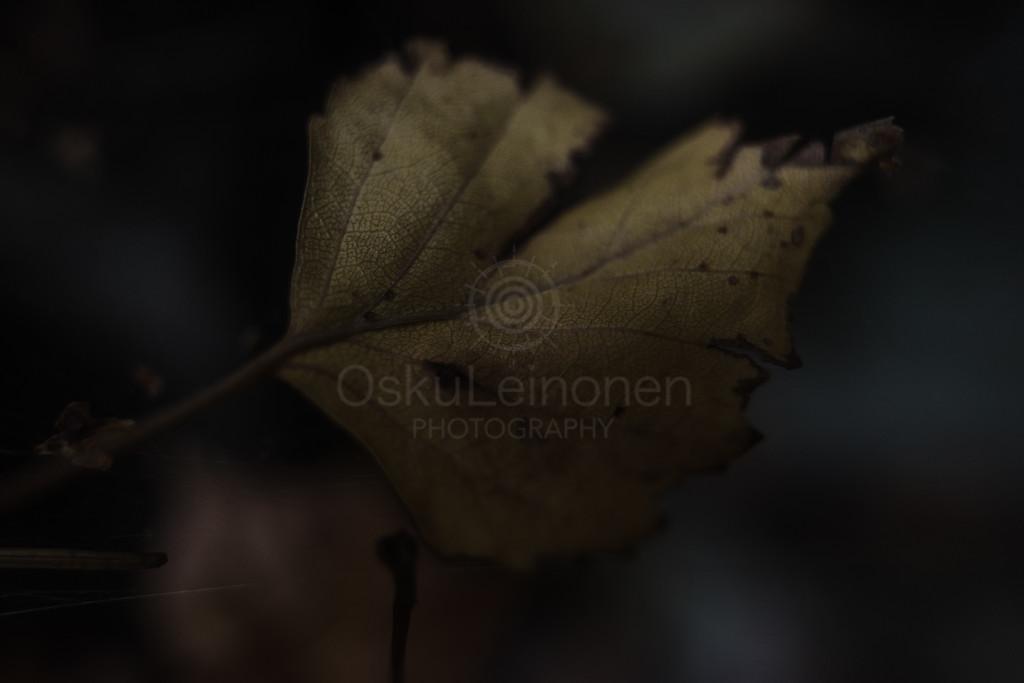 Golden Leaf V (Empower)