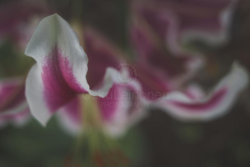 Aesthetic Nature XII (Toward)
