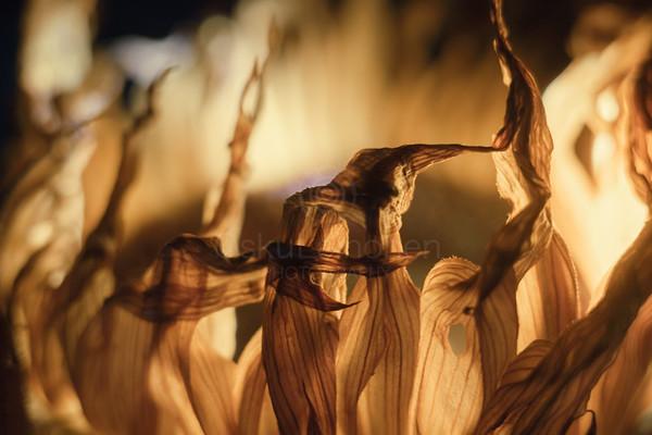 Sunflower At Night II
