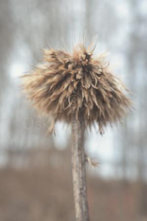 Spring Garden VI (Dry Flower)