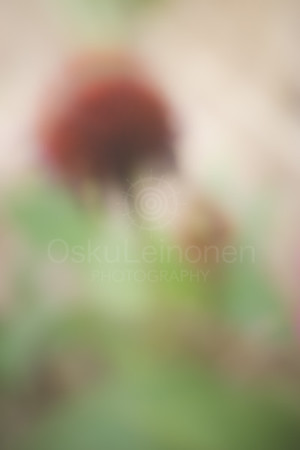 Aesthetic Nature II (Soft Red Flower)