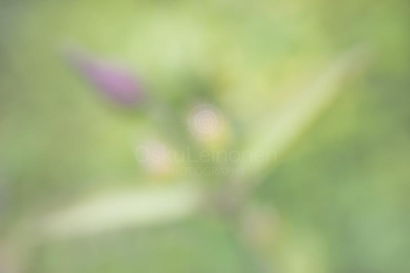 Aesthetic Nature VIII (Tenderly Soft)