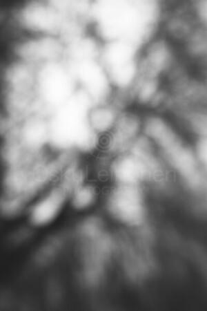 Dreamy View X (Tree)