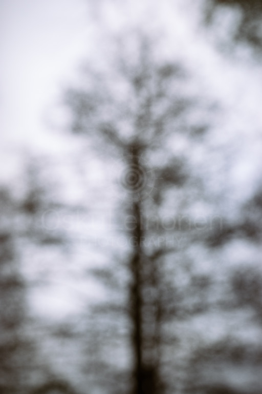 Dreamy View IV (Tree)