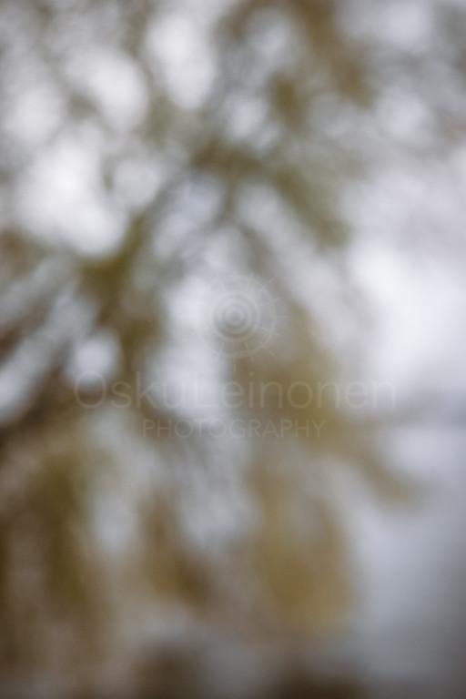 Dreamy View I (Tree)
