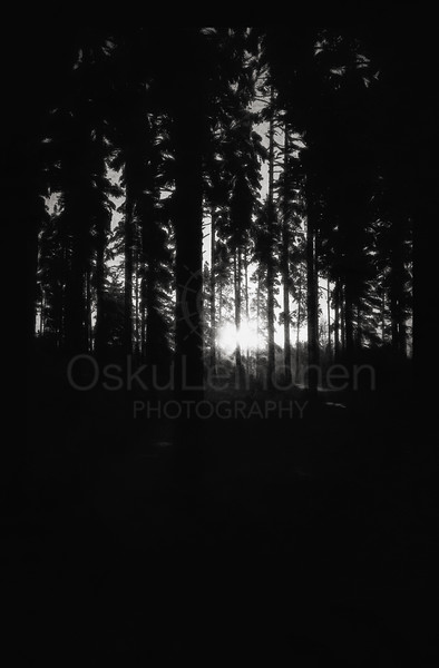 Light Through Fingers (Breath as Forest) BW