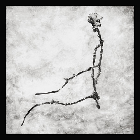 Twig (Branch as Your Spine) BW