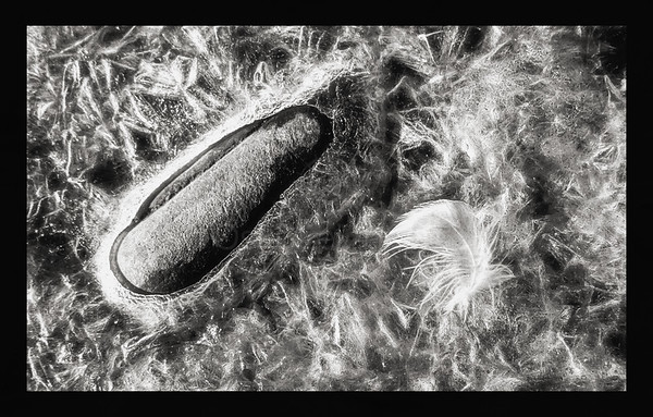 Rock Ice and Feather BW