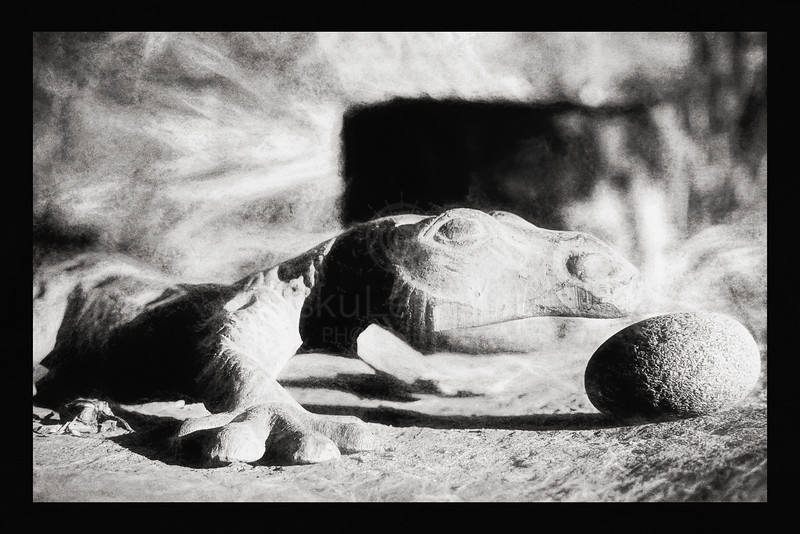 Lizard and Stone Egg (Crawl on all fours) BW