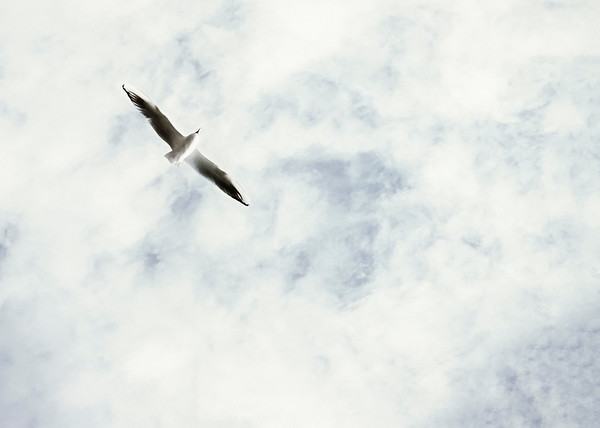Fly High above the Sky (Seagull)