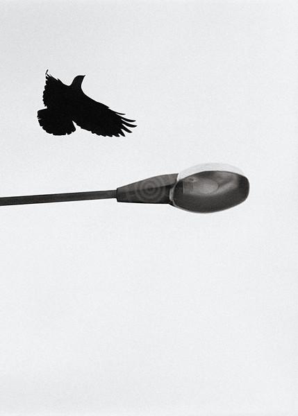 Hop (Taking Flight)