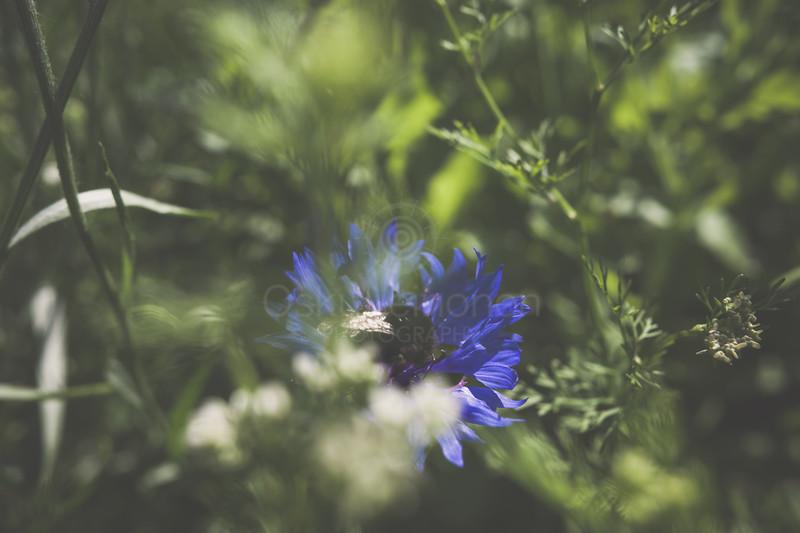 Bumblebee I (Blue Flower)