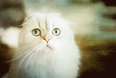 Mémoire of The Cat
