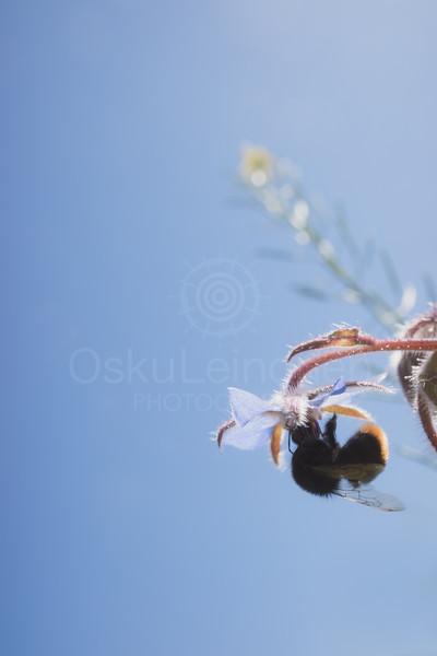 Bumblebee IV (Hanging)