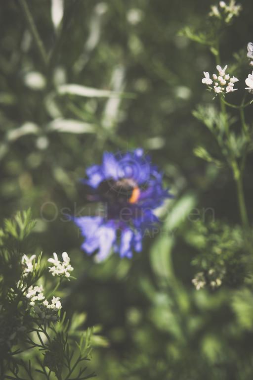Bumblebee II (Hidden)