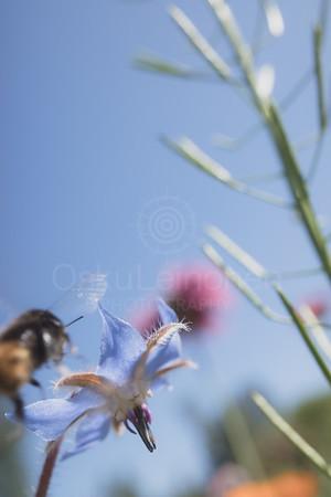 Bumblebee V (Enter)