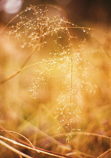 Warmth as Colors (Meadow)