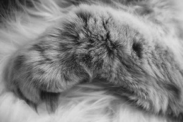 Thoughtful Softness II (Paw)