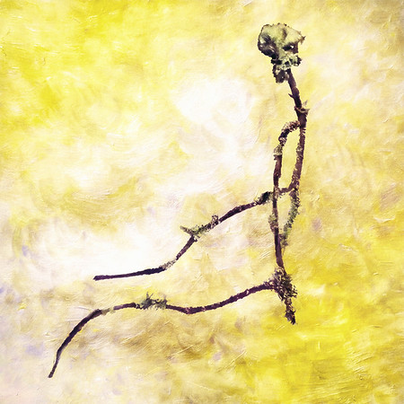 Twig (Branch as Your Spine)