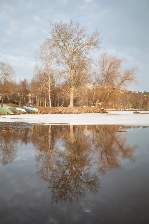 Spring Tree (Reflection)