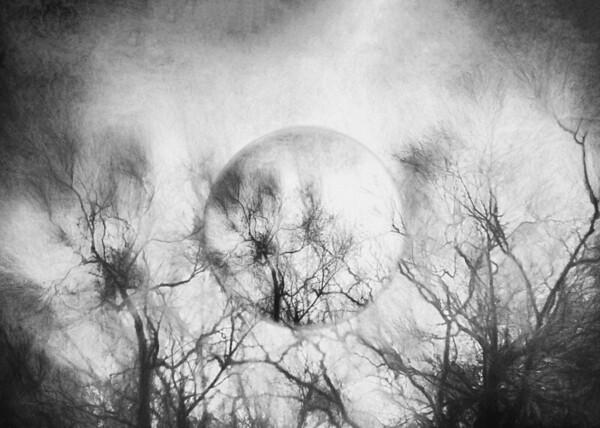 Trees Silhouette (Alternative Dimension)