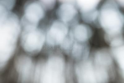 Empowering Light IV (Scenery Of Trees)
