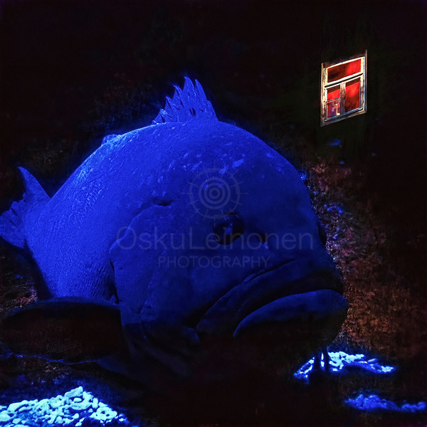 Blue Fish and WIndow