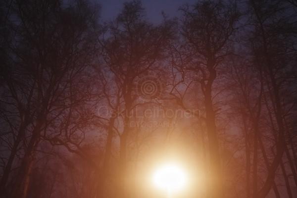 Night Walk At Pispala XIV (Trees)
